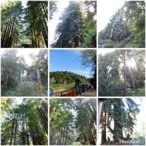 PhotoGrid_1522879859908.jpg